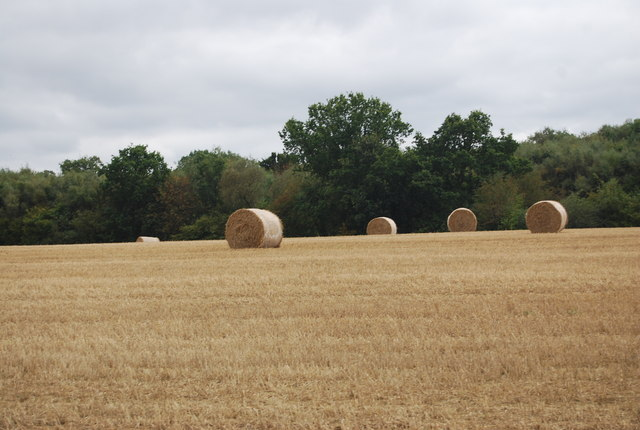 Hay bales by the Tunbridge Wells Circular Path