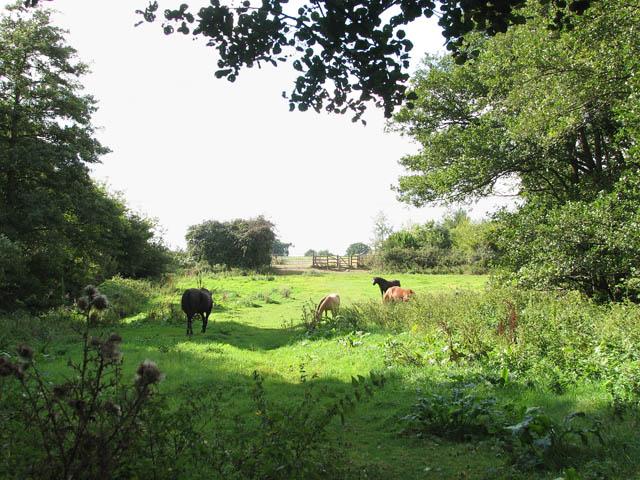 Horses grazing pasture