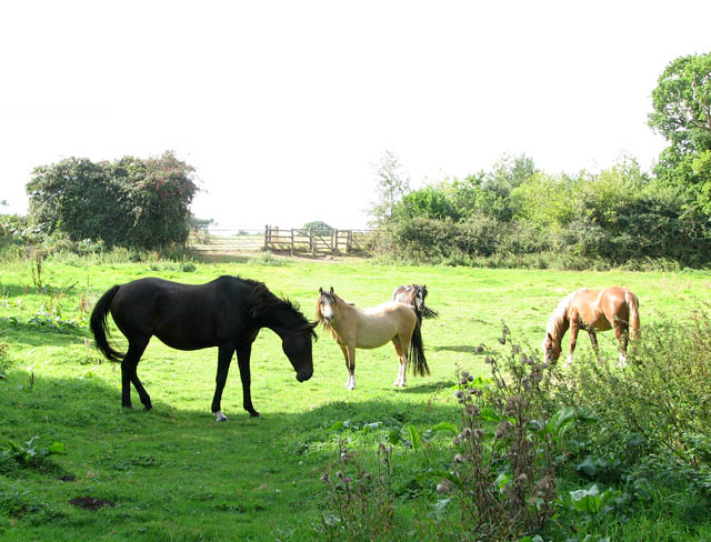 Horses and ponies on the Wherryman's Way
