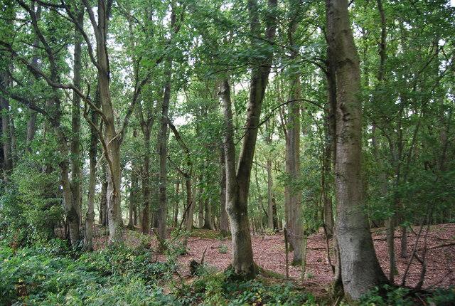 Harrison's Rocks Woods
