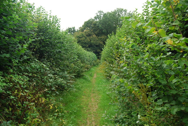The Tunbridge Wells Circular Path becomes a green lane