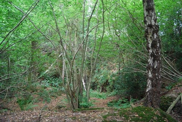 Harrison's Rocks Wood by the Tunbridge Wells Circular Path