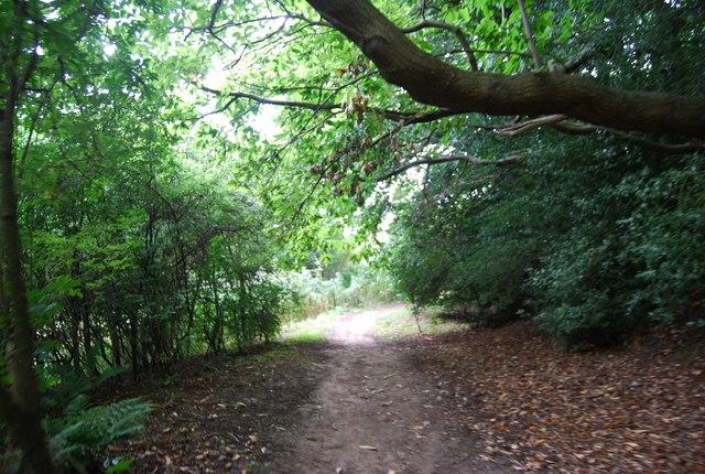 Tunbridge Wells Circular Path in the trees near Forge Farm