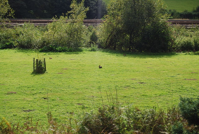 Rabbits by the railway line, Forge Farm