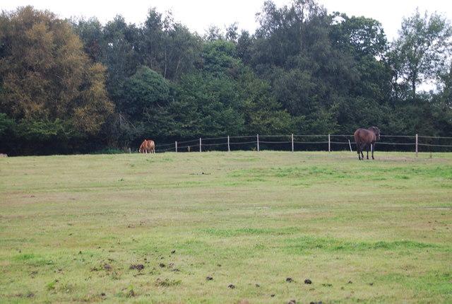 Horses by the Tunbridge Wells Circular Path