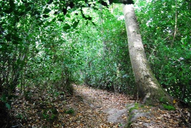 Tunbridge Wells Circular Path - Beech Wood