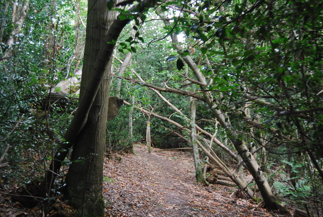 Tunbridge Wells Circular Path - near the top of Groombridge Hill, Beech Wood