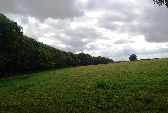 The northern edge of Beech Wood