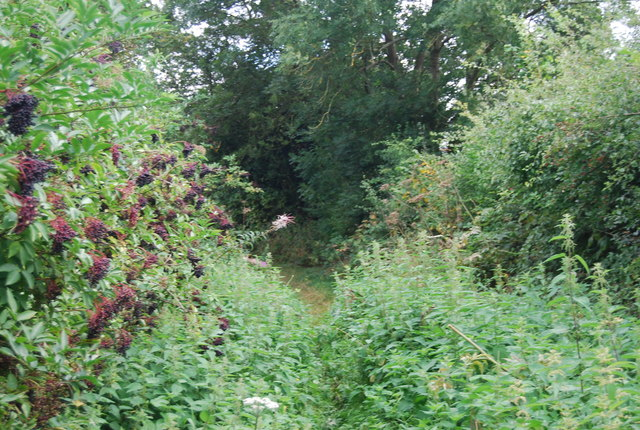 An overgrown section of the Tunbridge Wells Circular Path