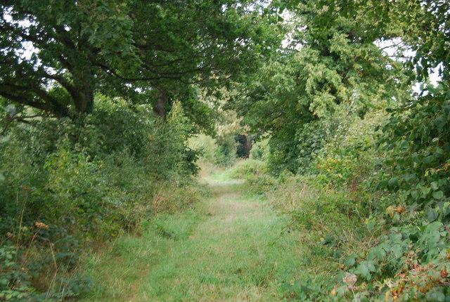 Tunbridge Wells Circular Path - green lane section