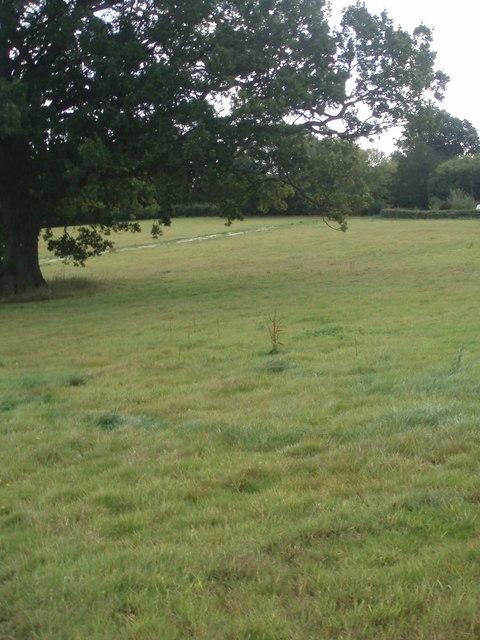 Field south of Crooks Wood