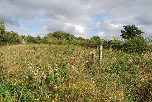 Roadside Verge Nature Reserve, A264