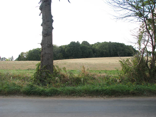 Woodland west of Low Road