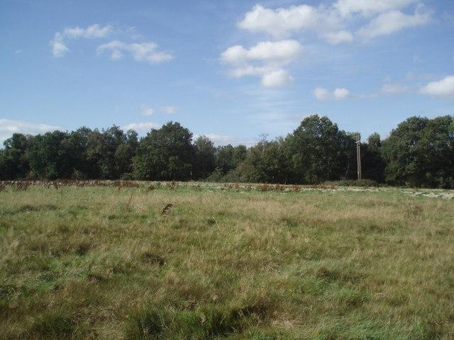 Field West of Tutts farm