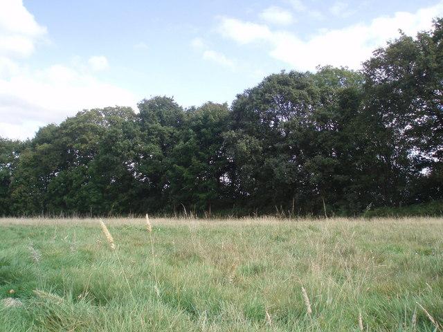Field near Dismantled Railway