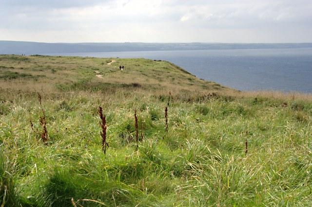 On Glebe Cliff