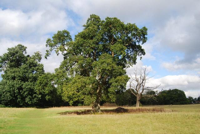 Tree by the Tunbridge Wells Circular Path