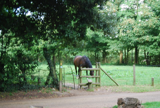 Horse by a stile on the Tunbridge Wells Circular Path