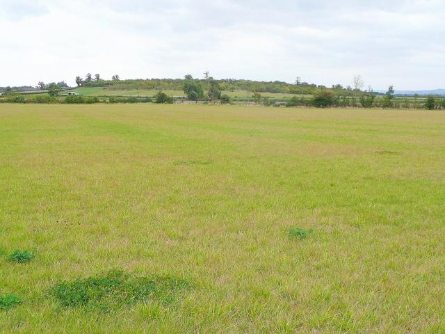 Flat pasture near Sedgeberrow