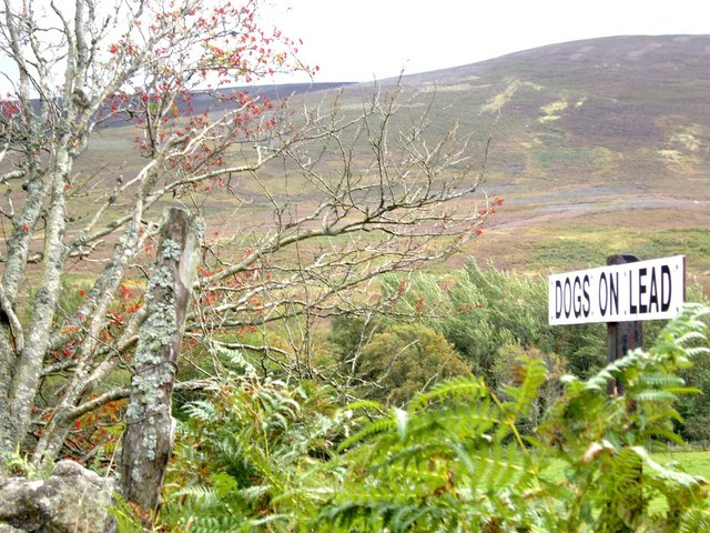 Canine advice in Forest of Birse
