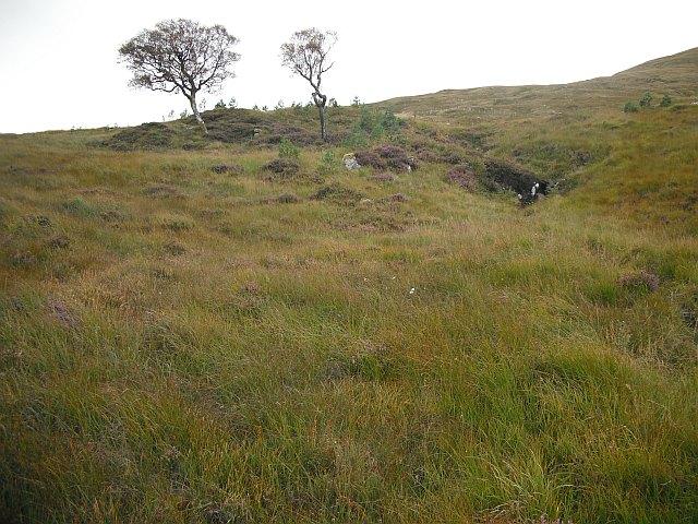 New woodland, Bad na Gualainn