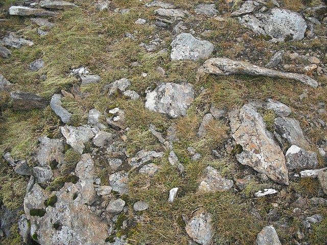 Vegetation, Beinn a' Chreachain