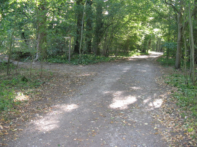 Cook's Lane(track) through Nowhurst Copse