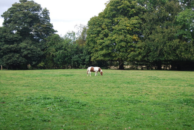 Horse in a field by the Tunbridge Wells Circular Path near Shirley Hall