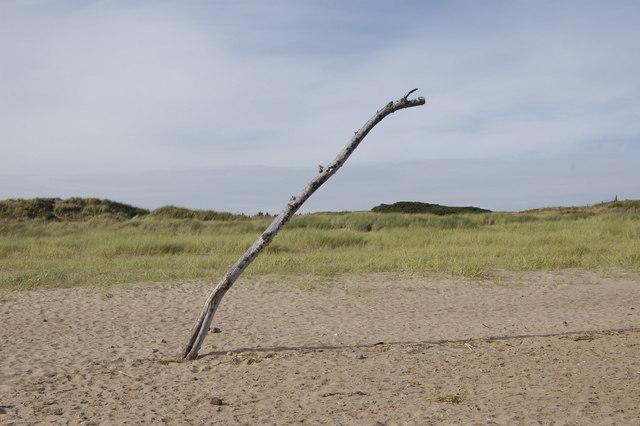 Driftwood Sculpture?