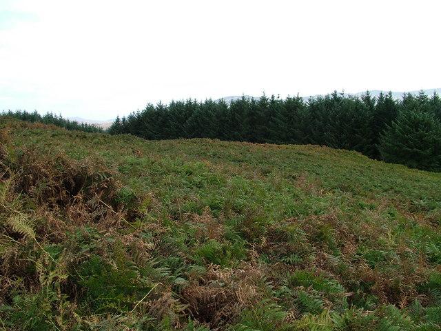 Jan's Wood, Muncaster Fell