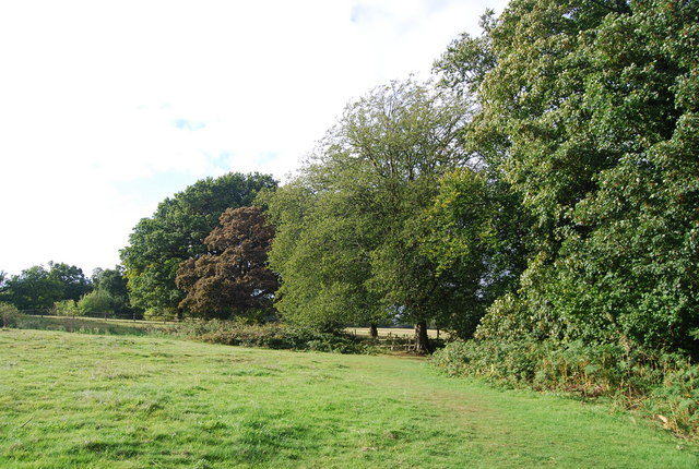 Trees by the Tunbridge Wells Circular Path