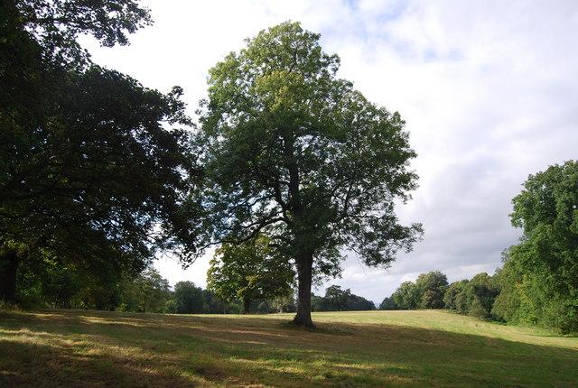 Tree by the Tunbridge Wells Circular Path, north of Legg's Lane