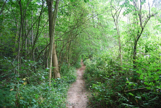 Tunbridge Wells Circular Path - Toll Wood