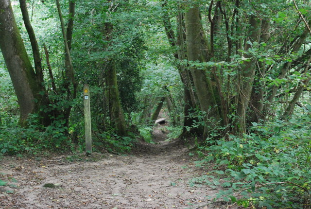 Waymarker for the Tunbridge Wells Circular Path, Toll Wood