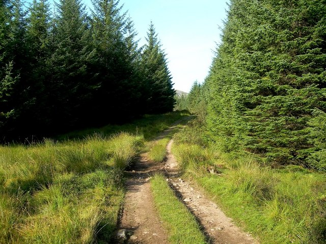 Track In The Galloway Forest