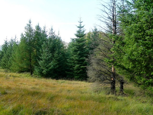 In The Galloway Forest