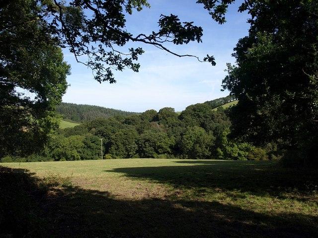 Meadow beside Tillerton Steep