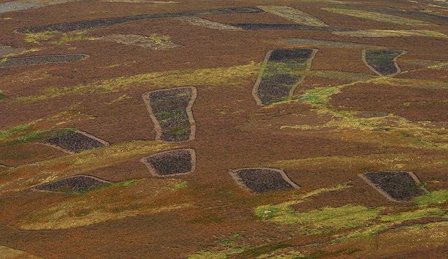 Heather patterns on Maiden Rig