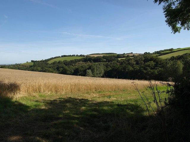 Field near Frogmill