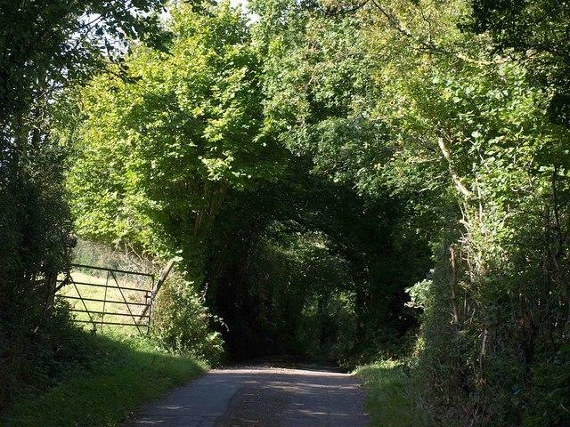 Lane below Tillerton