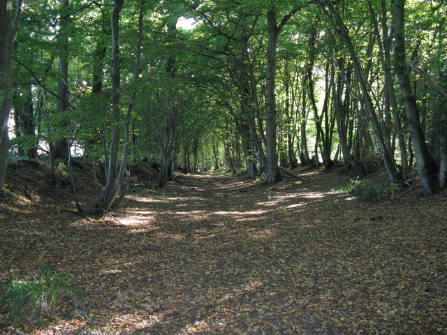North end of bridleway through Plattershill Copse