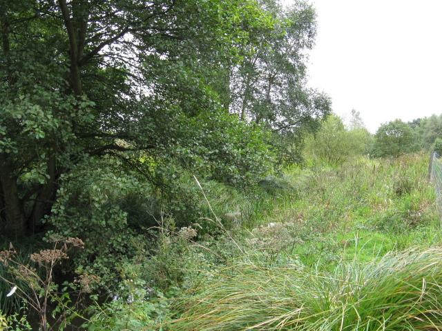 Overgrown Mill Stream, Tatton Park