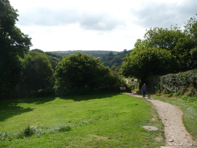 Exmoor : Grassy Area & Path to Tarr Steps