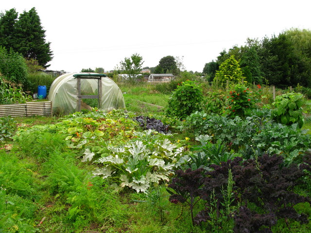 Allotment Gardens, Sowerby