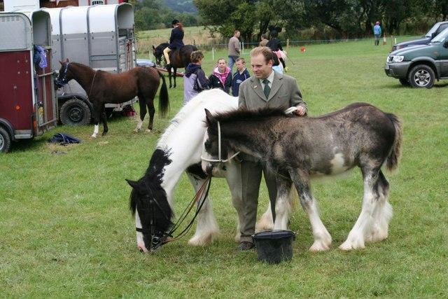 He's a big foal