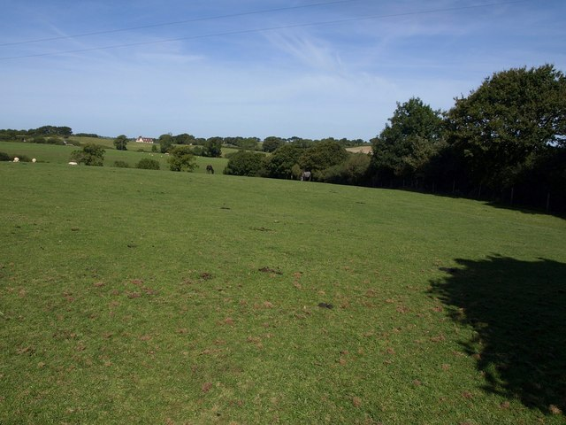 Pasture by Holewell Lane
