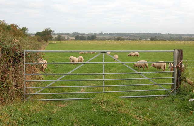 Sheep pasture north of the Dunchurch to Woolscott lane