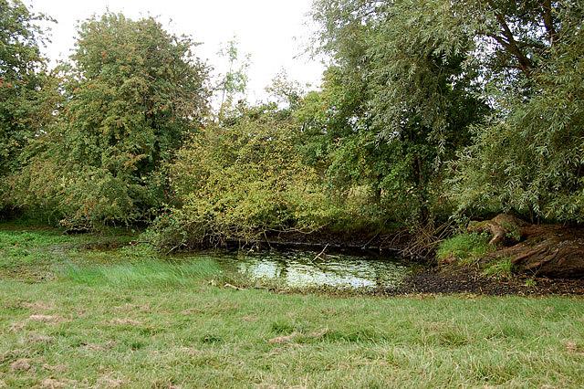 Small pond near Woolscott
