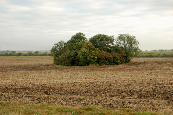 Clump of trees beside the footpath to Whitehall Farm