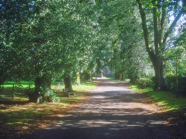 Tree-lined avenue leading to St Denys Church
